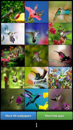 五顏六色的蜂鳥