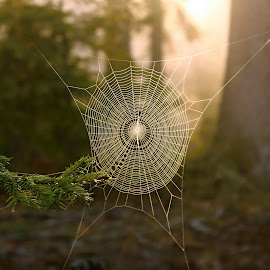 Cobweb in the woods by Milan Horejsi - Nature Up Close Webs ( netting, bright, drop, dew, spiderweb, catch, shine, circle, net, spring, bokeh, network, sun, macro, cobweb, nature, thread, spider, wet, catching, cobwebs, mesh, water, abstract, silk, waterdrop, green, web, morning, trap, pattern, pearls, outdoor, background, mist )