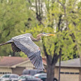 Kerr HS Biology Backyard Birds