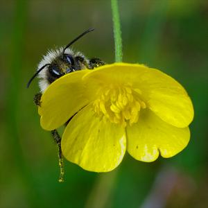 Bee_0003.jpg