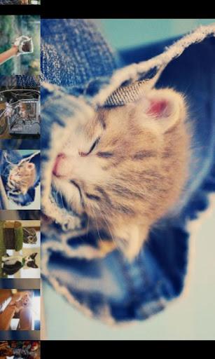 100 Free Cute Kittens Gallery