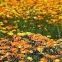 Garden Of Eden LWP Full Ver