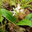 Minnesota Edible and Medicinal Plants