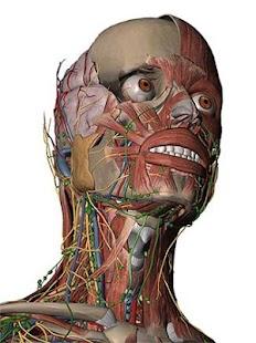 解剖圖集免費