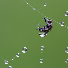 Captured by Jean Photo-Vigneault - Animals Insects & Spiders