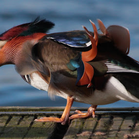 by David Walker - Animals Birds