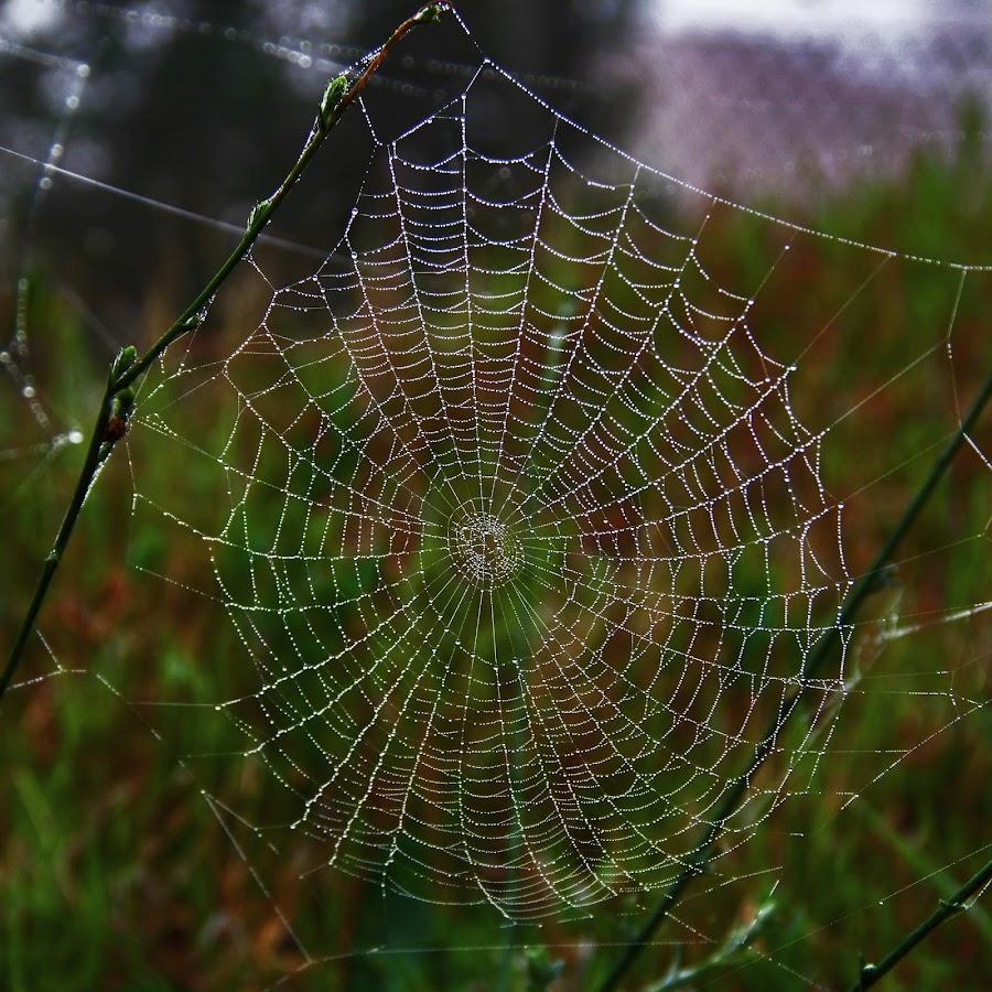 a web  by Magdalena Wysoczanska - Nature Up Close Webs (  )