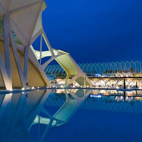 Alone by Jerzy Szablowski - Buildings & Architecture Public & Historical ( reflection, blue, sunset, valencia, dusk, calatrava, spain, city )