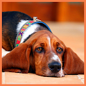 Dog Wallpaper LWP
