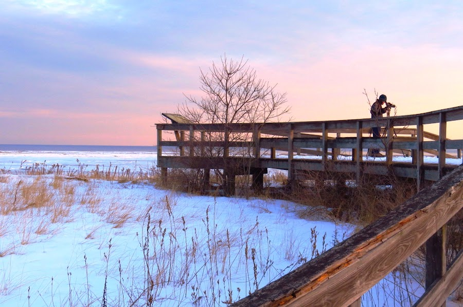 Search for Snowy by Erika  Kiley - Landscapes Beaches ( winter, sunset, beach, birder )