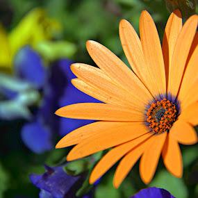 Lovely Golden Flower by Dale Fillmore - Flowers Single Flower ( color, artistic, golden burst, garden, flower,  )