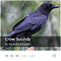 Crow Sounds icon