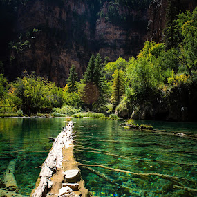 Floating Giant by Derrick Leiting - Landscapes Waterscapes ( water, tranquil, beatiful, mountains, blue, green, colorado, floating, summer, lake, log )