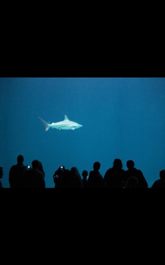 shark aquarium live wallpaper - photo #15