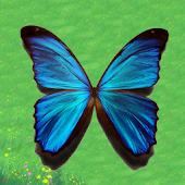 Tiny Butterflies