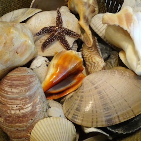 Seashells in Burlap by Judy Dean - Nature Up Close Other Natural Objects ( burlap, shells, nature, sea, ocean,  )