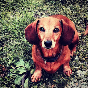Buster by Kisha Webb - Animals - Dogs Portraits