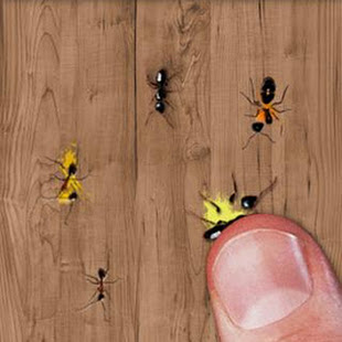 Ant Smasher, Best Free Game 6.0