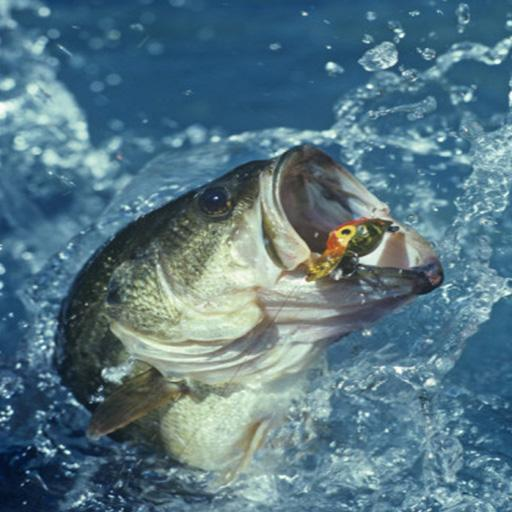 bass fishing wallpaper iphone images