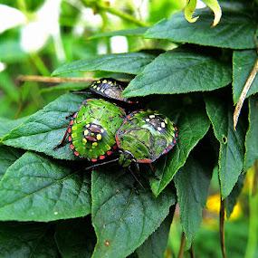 Martini se skupili by Katica Pecigoš-Kljuković - Nature Up Close Hives & Nests ( bbotanički )
