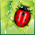 Save The Beetle icon