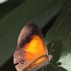 Cacodaemon Bush Brown