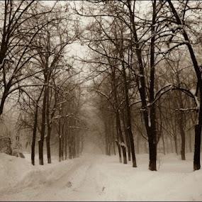 Winter fairy by Doru Sava - City,  Street & Park  Street Scenes