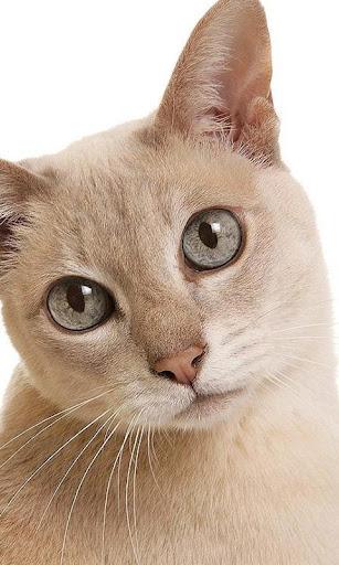 奇尼猫壁纸