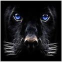 Wild Tigers icon
