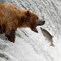 Katmai Bears logo