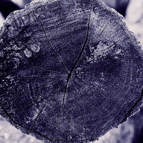 logged by Massie Reep - Nature Up Close Trees & Bushes ( wood, tree, black and white, logs, blue )