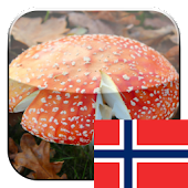 KinoPad Norwegian - Pic Search