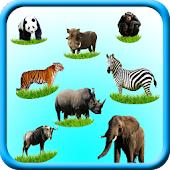 Wild Animals Sounds