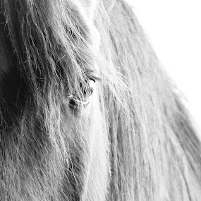 Window to the Soul by Michelle Cutt - Animals Horses ( #GARYFONGPETS, #SHOWUSYOURPETS )