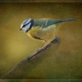 Latest painterly image - bird themed by Joan Blease - Digital Art Animals