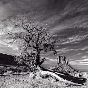 Monument Valley Number 2 by Flavio Mini - Black & White Landscapes ( monument valley, utah, black and white, mittens, landscape,  )