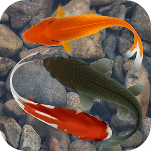 Beautiful fish screensaver fre android apps on google play for Fish store phoenix