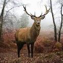 Deer Live Wallpaper icon