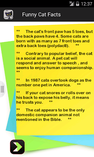 Funny Cat Facts
