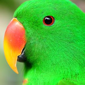 birdpix1.jpg