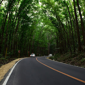 Man Made Forest by Arcelous Lu - Transportation Roads (  )