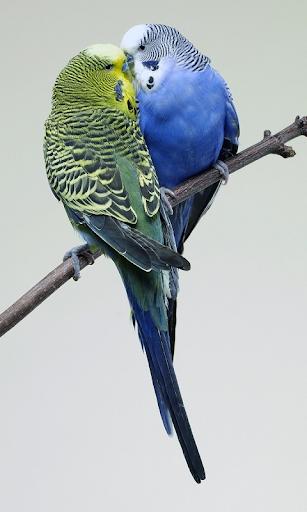 앵무새 배경 화면
