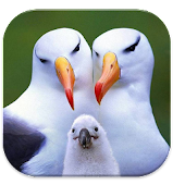 Bird Puzzle Game for Kid
