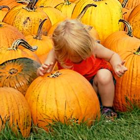 Girl With Pumpkins by Robin Amaral - Public Holidays Halloween ( child, pumpkin patch, farmers market, autumn, pumpkins, harvest, halloween )