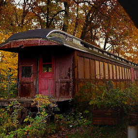 tain in fall by Jay Anderson - Transportation Trains ( train tracks, old, overgrown, colorful, railroad, dusk, woods, passenger, nature, color, autumn, train car, fall, train, trees, trip, rust, steam, abandoned,  )