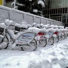 Zatečeni, by Katica Pecigoš-Kljuković - Transportation Bicycles ( snijeg trg kaptol hnk )