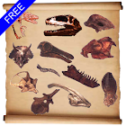Dinosaur Hunt icon
