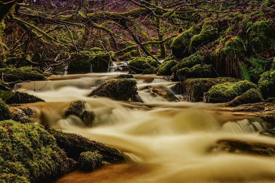 Hot Chocolate by Warren Matthews - Landscapes Waterscapes ( water, wild, wood, park, heaven, green, wallpaper, waterfall, stone, tourism, forest, valley, sunlight, landscape, photo, spring, rainforest, nature, tree, outdoor, stones, rocks, river, spa,  )