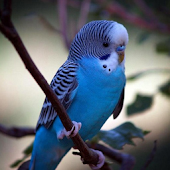 Parrots Live Wallpapers