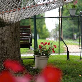 by Ian  Rivera - Nature Up Close Gardens & Produce